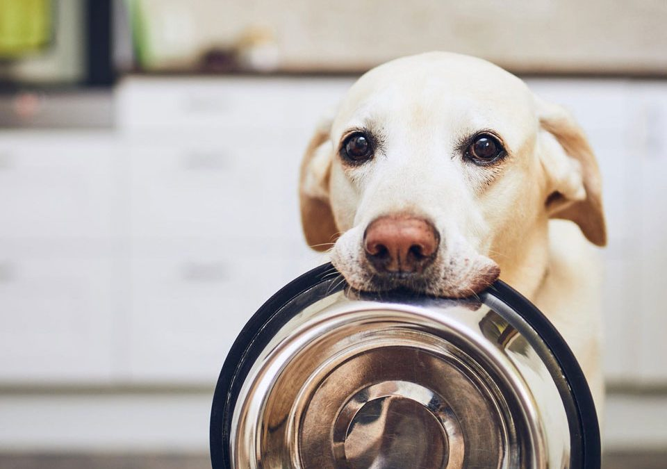 a pet dog waiting for his food